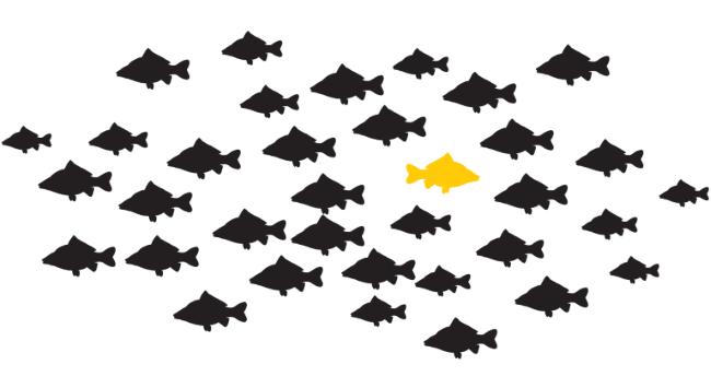 Fischschwarm (Bild: Paessler)
