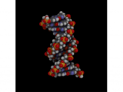 DNA-Helix (Bild: Spiffistan, via Wikimedia)DNA-Helix